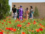 Turkmen women talking with poppies in the foreground