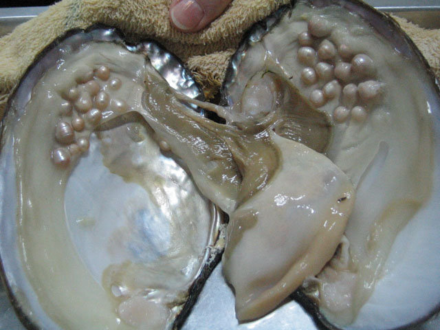 Pics For > Real Pearls In Oysters