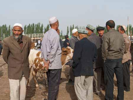 Uighur men chatting around a cow