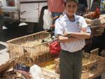 Boy selling poultry