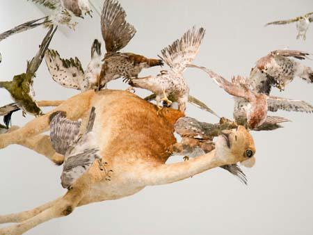 'flying together' - life-like falcons with camel